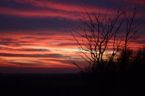 A winter sunset in the Fens