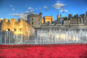 The Tower of London moat filled with remembrance poppies